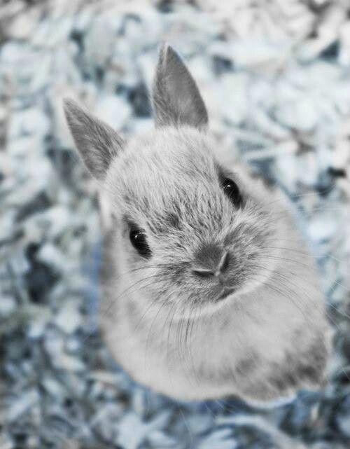 Pin de Silvena Petrusheva en cats | Pinterest | Conejo, Animales y ...