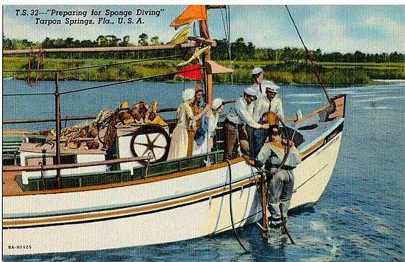 Vintage Florida Postcard Preparing For Sponge Diving Tarpon Springs The Vintageplum Shop On E Florida Travel Florida Vacation Florida Springs