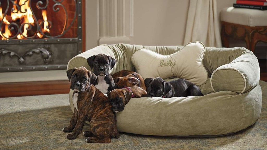 Dog Couches For Large Dogs Monogrammed Beds Comfortable Couch