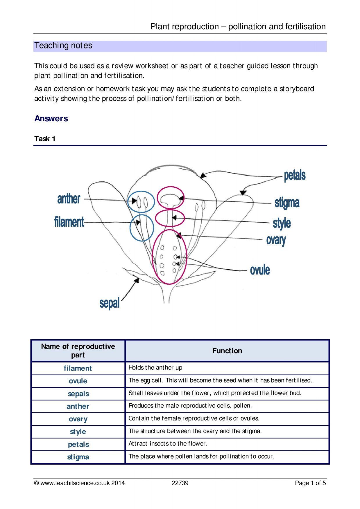worksheet Reproduction Worksheet plant reproduction pollination and fertilisation pre k 3 study fertilisation