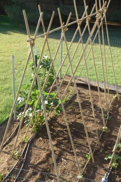 trellis for green beans Google Search Gardening Tips