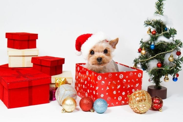 xmas #christmas #december #gifts #pets #cat #dog #cuddle #cute ...