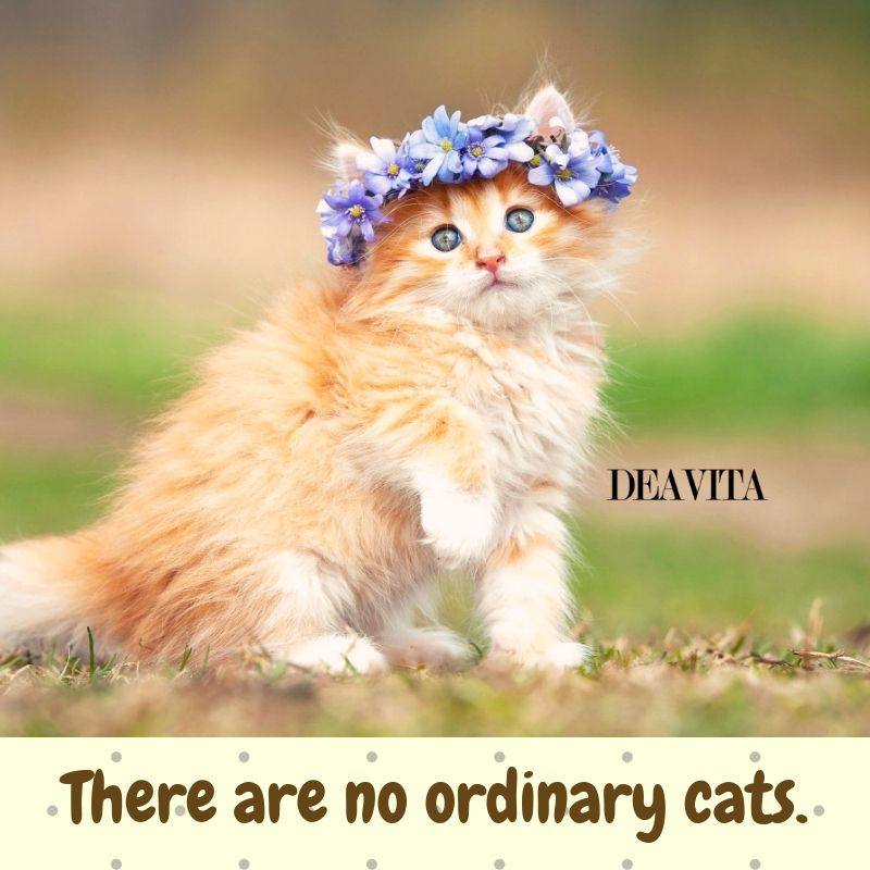 30 Super cool and funny cat quotes with lovely photos