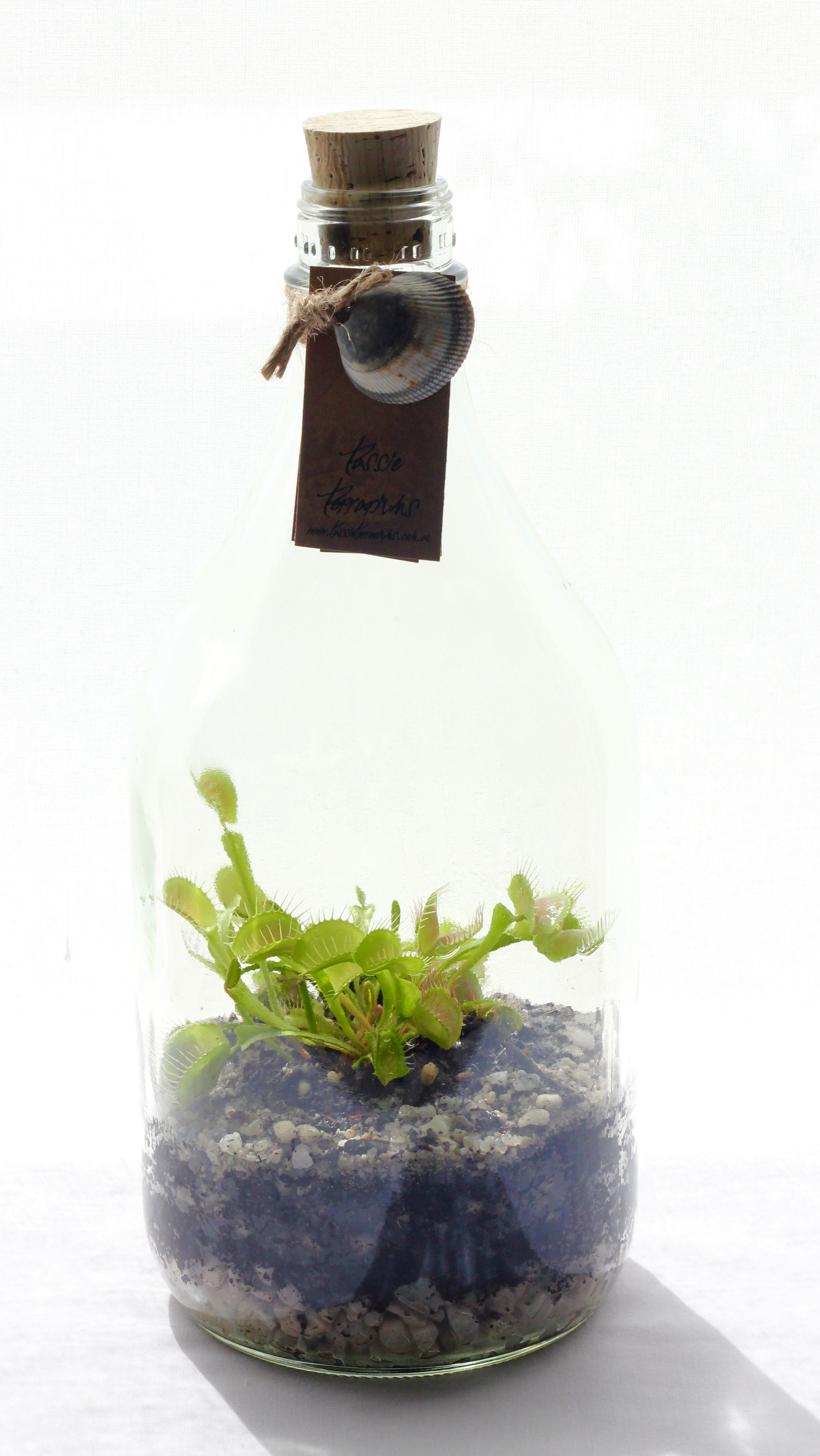 Venus Fly Trap Recycled Bottle Terrarium | Tin & Recycled Collection ...