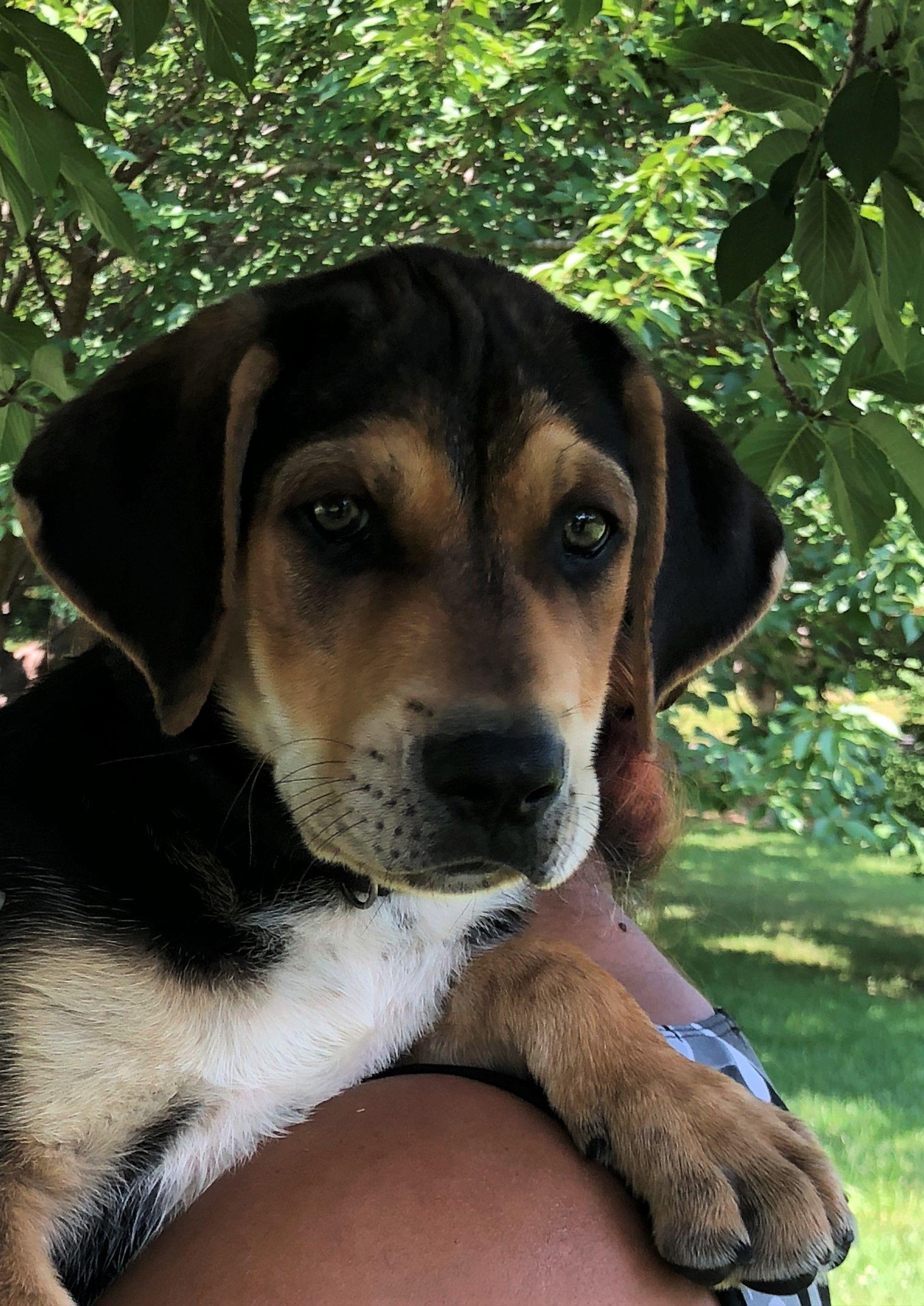 Adopt Loki on Petfinder Loki, Dogs, Humane society