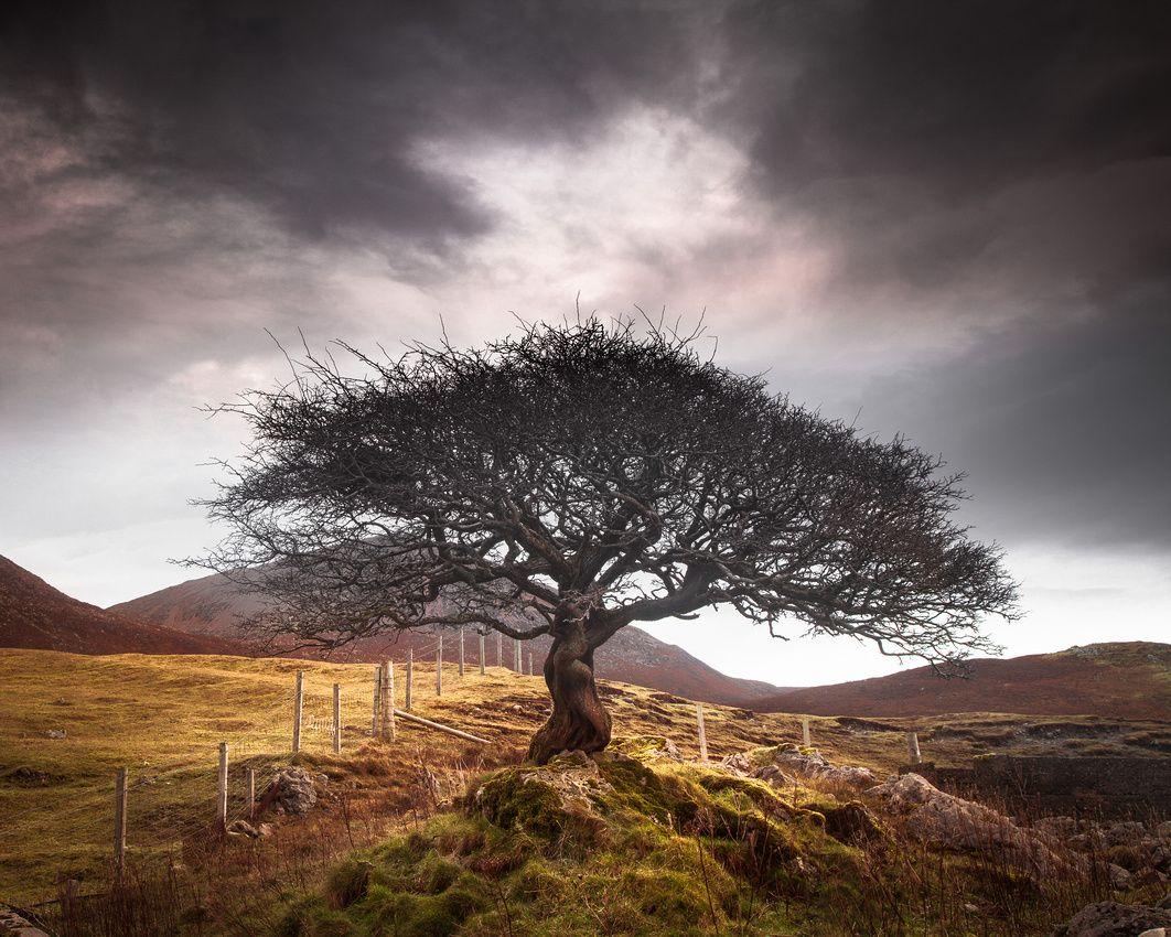 The One Tree, Isle of Skye