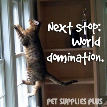 It all started with a #cat's supernatural ability to climb walls…