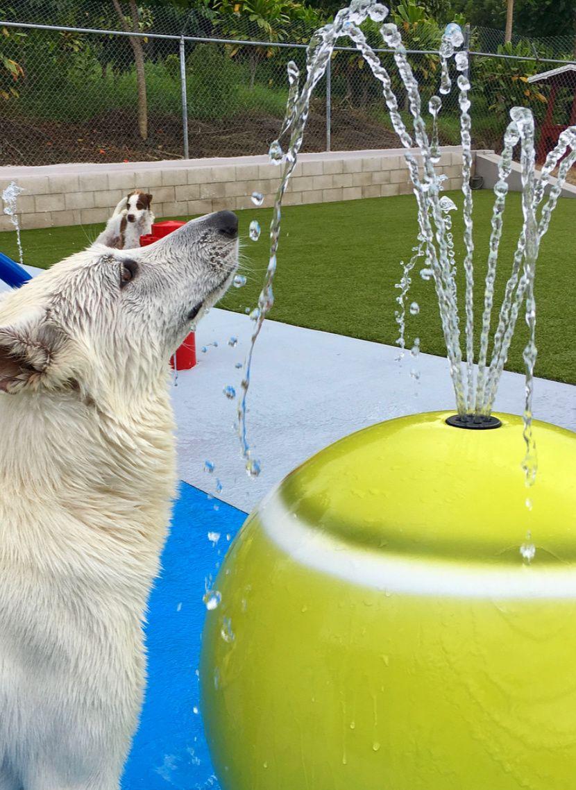 Doggie waterpark dog spray dog park equipment dog friends