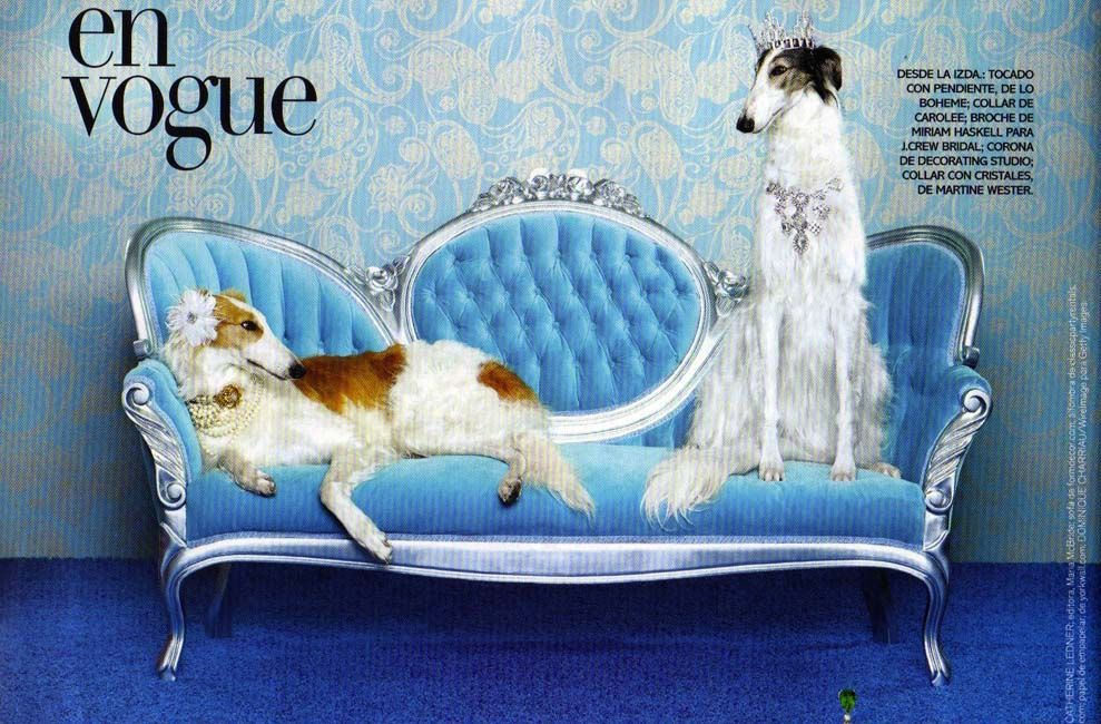photo by Catherine Ledner, Vogue Dec 2010 動物