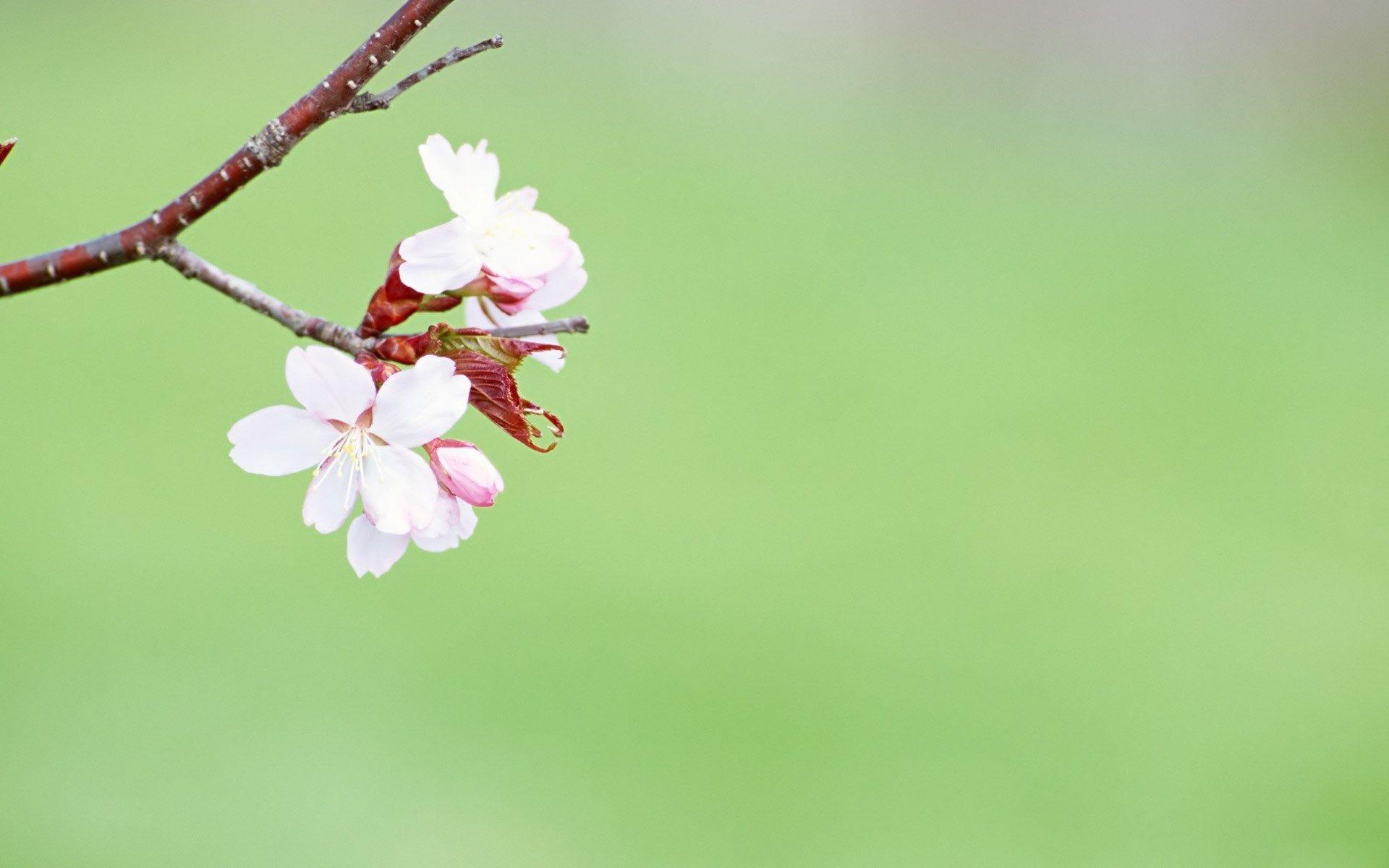 Spring flowers background sharovarka pinterest desktop spring flowers background mightylinksfo