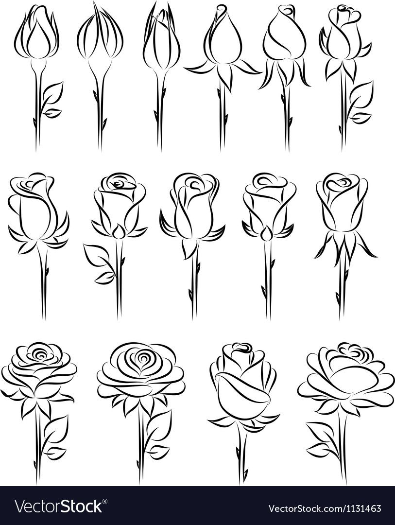 Set Of Roses Vector Image On In 2019 Projects Drawings Art