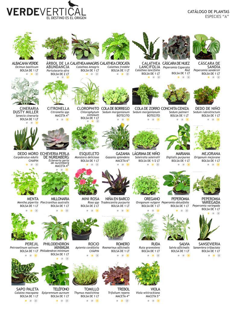 Jardines Verticales muros verdes Pinterest Jardín vertical
