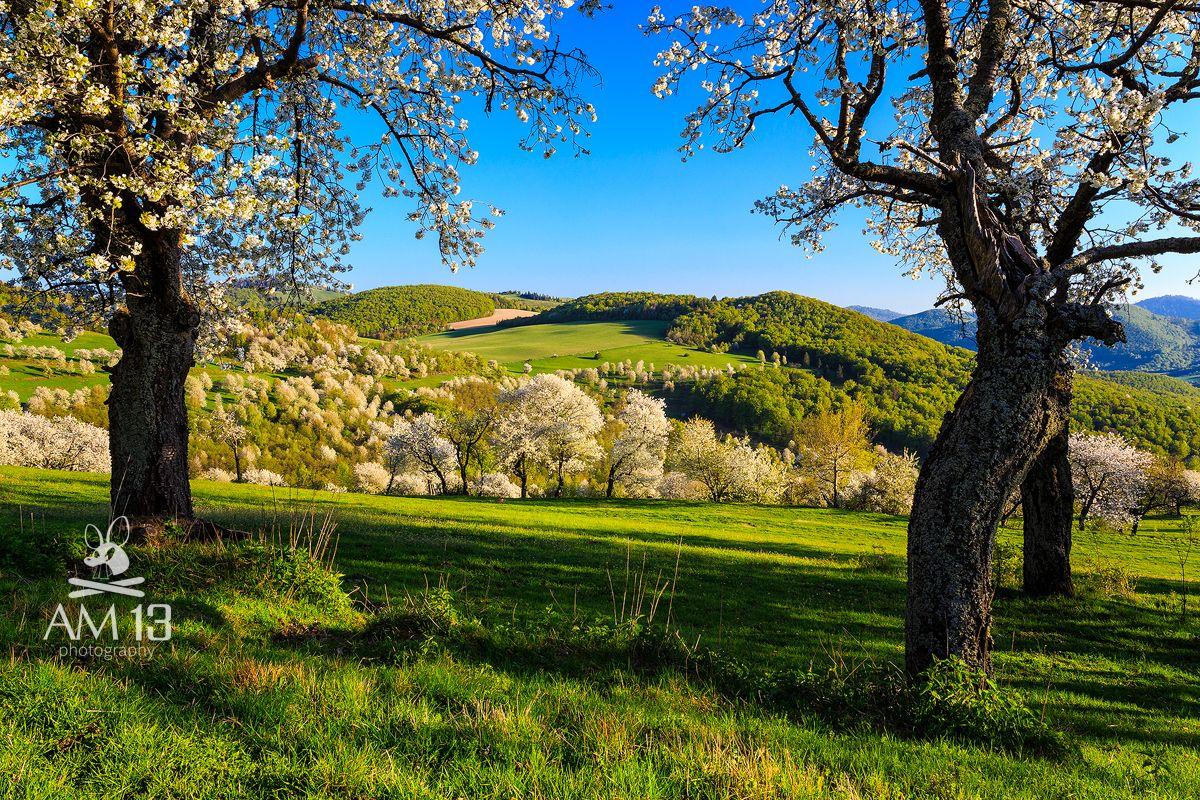 Foto-trip v malej obci Brdárka. Cesta za jej čerešňami a noc v ovocnom sade pri splne mesiaca. Pozrite si fotografie z tejto malebnej obce.