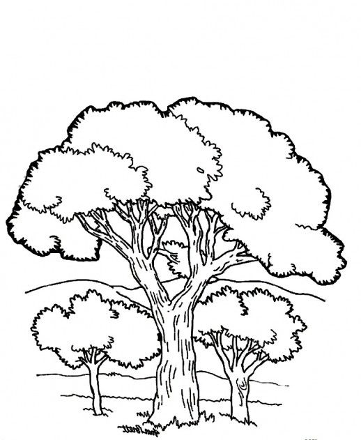 coloring pages printable mountains and trees # 4