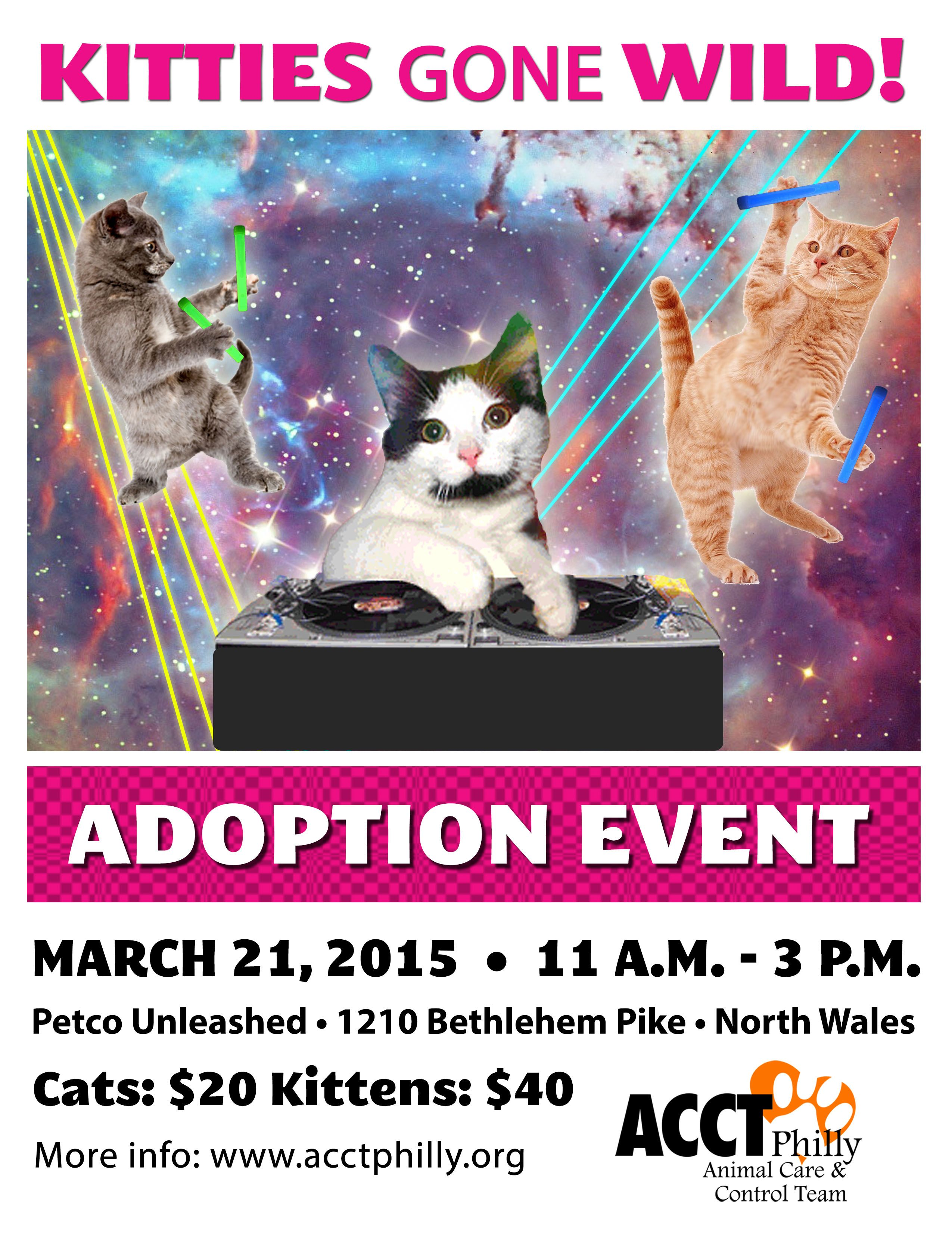 Pin By Jennifer Sigmon On Adoption Event With Images Kitten