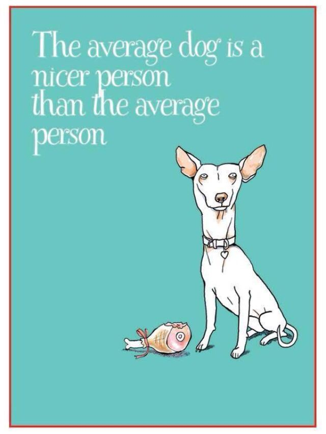 Dogs❤️❤️
