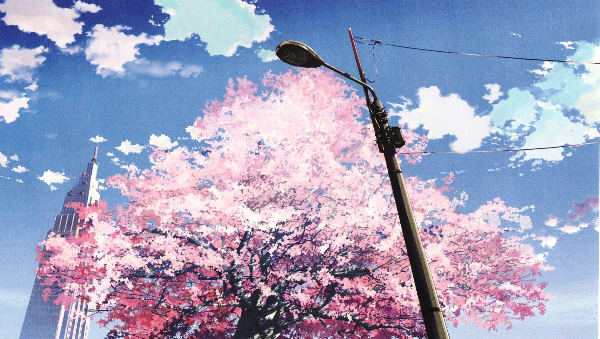 sakura tree in blossom Google Search Anime scenery