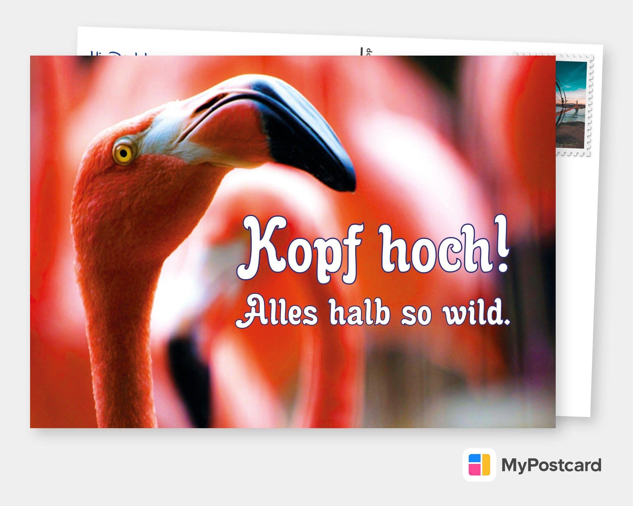 Lade dir die MyPostcard App und sende Grüße an Deine Liebsten! Einfach die Postkarte direkt online oder in der App selbst gestalten und versenden. Wir drucken und verschicken Deine Postkarte direkt an Deine Empfänger weltweit. Zaubere deinen Liebsten ein Lächeln auf's Gesicht und versende eine personalisierte Postkarte, um zu zeigen, dass du an sie denkst! 💌 🌍 Kopf hoch, halb so wild. #MyPostcard #Postkarte #Postkarten #Karte #Karten #Urlaub