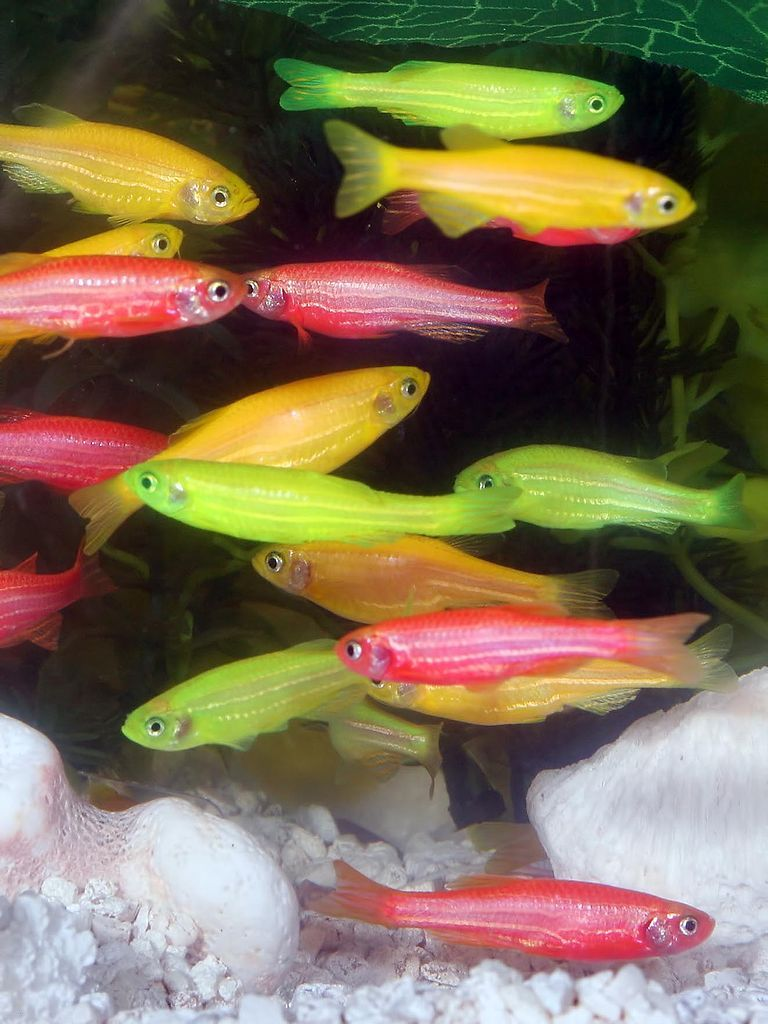 Poissons fluo