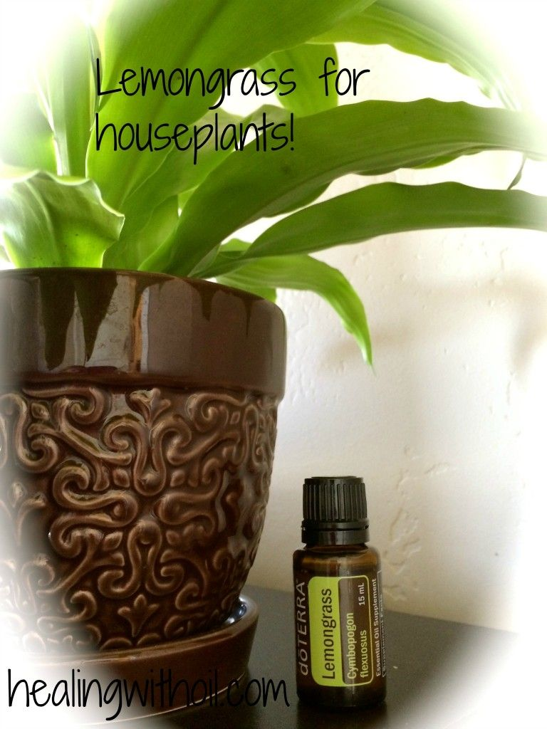 Help Your Houseplants With Lemongrass Essential Oil | Happy ...