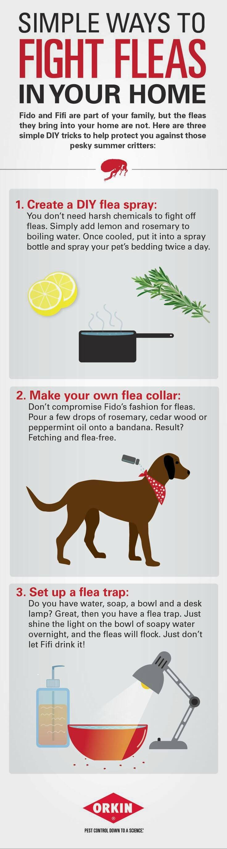 How To Get Rid Of Fleas In The House Video Tutorial (With ...