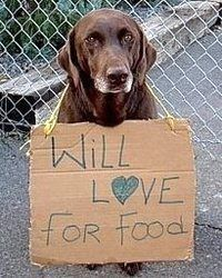 Adopt A Homeless Pet Animals Animal Shelter Animal Rescue