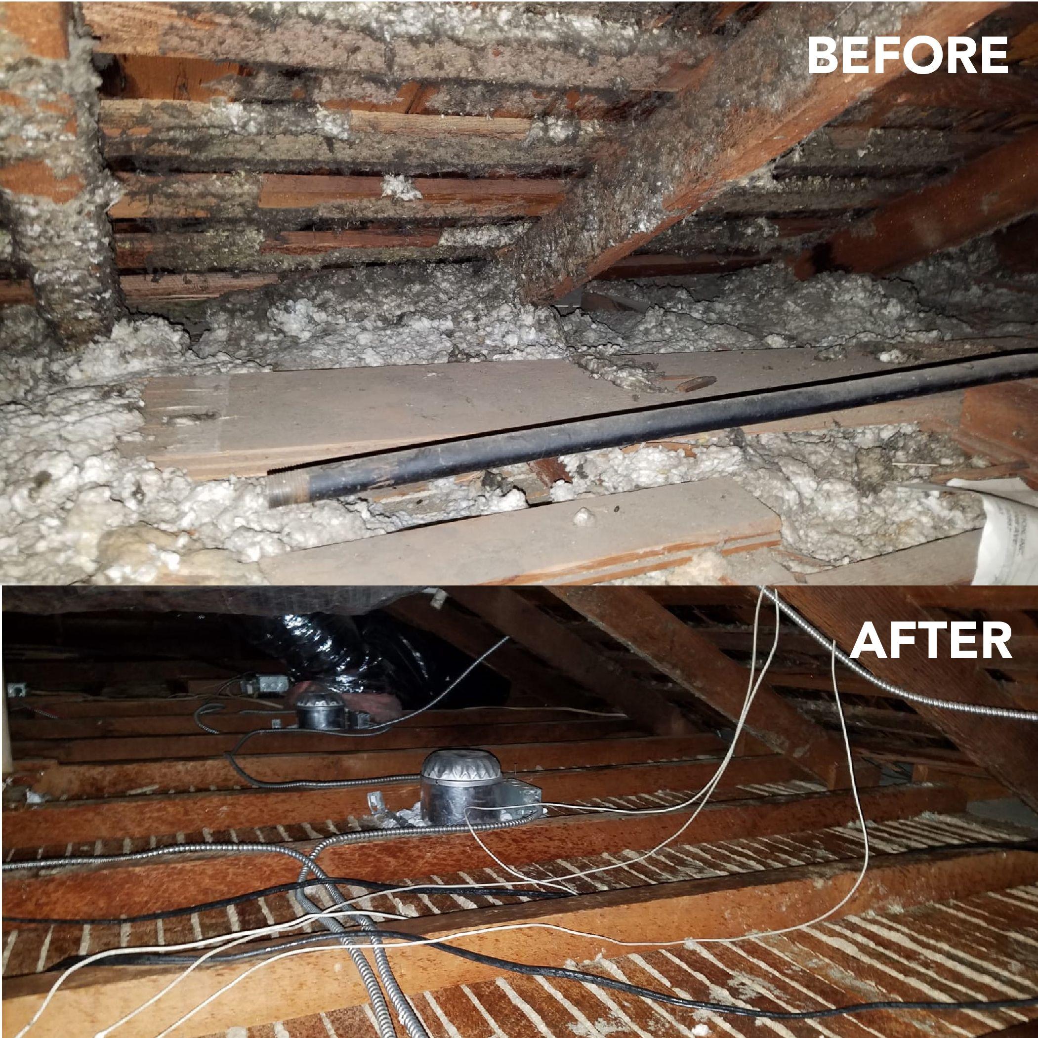 Attic decontamination rodents cleanup attic insulation