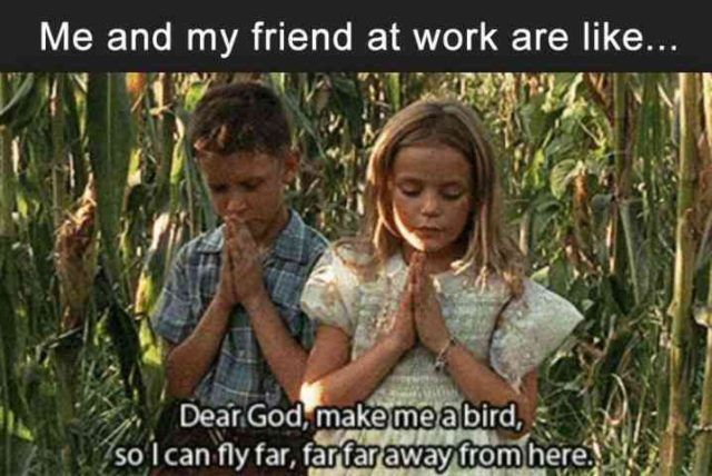 "New Funny Work Funny Work Memes - Hilarious Work Humor and Office Fun Me and my friend at work are like ""Dear God, make me a bird so I can fly far far far away from here.""    Don't miss all of our funny memes for work about coworkers and work life.  #coworker #office #funnypictures #funnyimages #funnymemes #memes #email #officelife #jobs #working #workingmom #humor #workhumor 3"