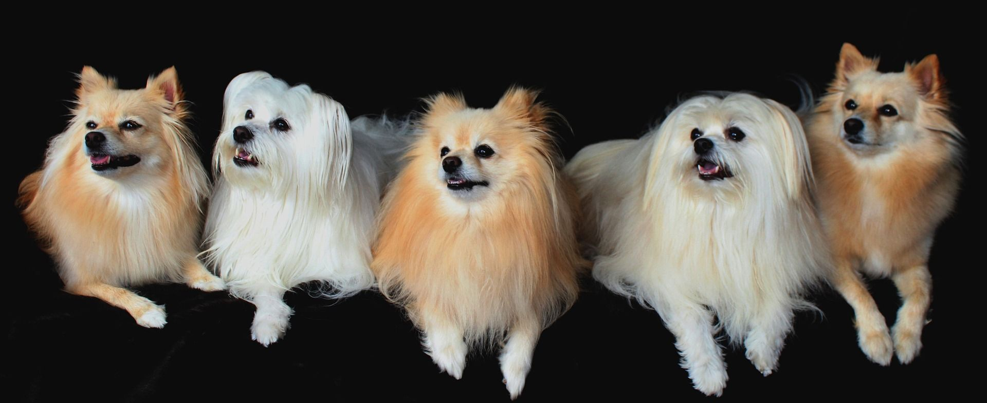 All About DogRelated Issues Reverse sneezing in dogs