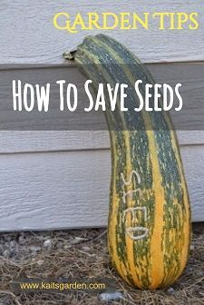 How to Save Seeds is part of Urban garden Drawing - Have you ever wanted to save seeds from your garden to plant next year  Tried to save seeds and it didn't go so well  Learn how to save seeds the right way!