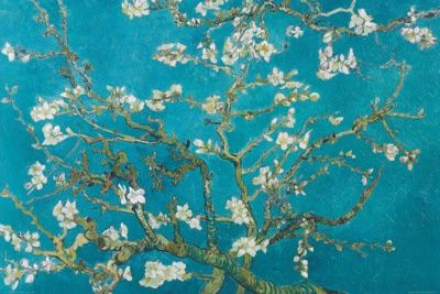 Almond Blossom, San Remy, 1890 Posters tekijänä Vincent van Gogh AllPosters.fi-sivustossa