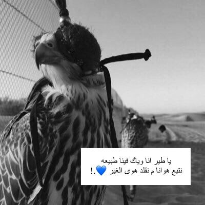 Pin By سحابة خي ر On م ـقـتــ بــسـات Beautiful Arabic Words Short Quotes Love Cute Profile Pictures