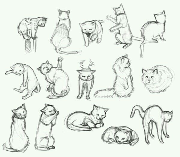 Cat Pose Reference Animal Drawings Cat Sketch Cat Drawing