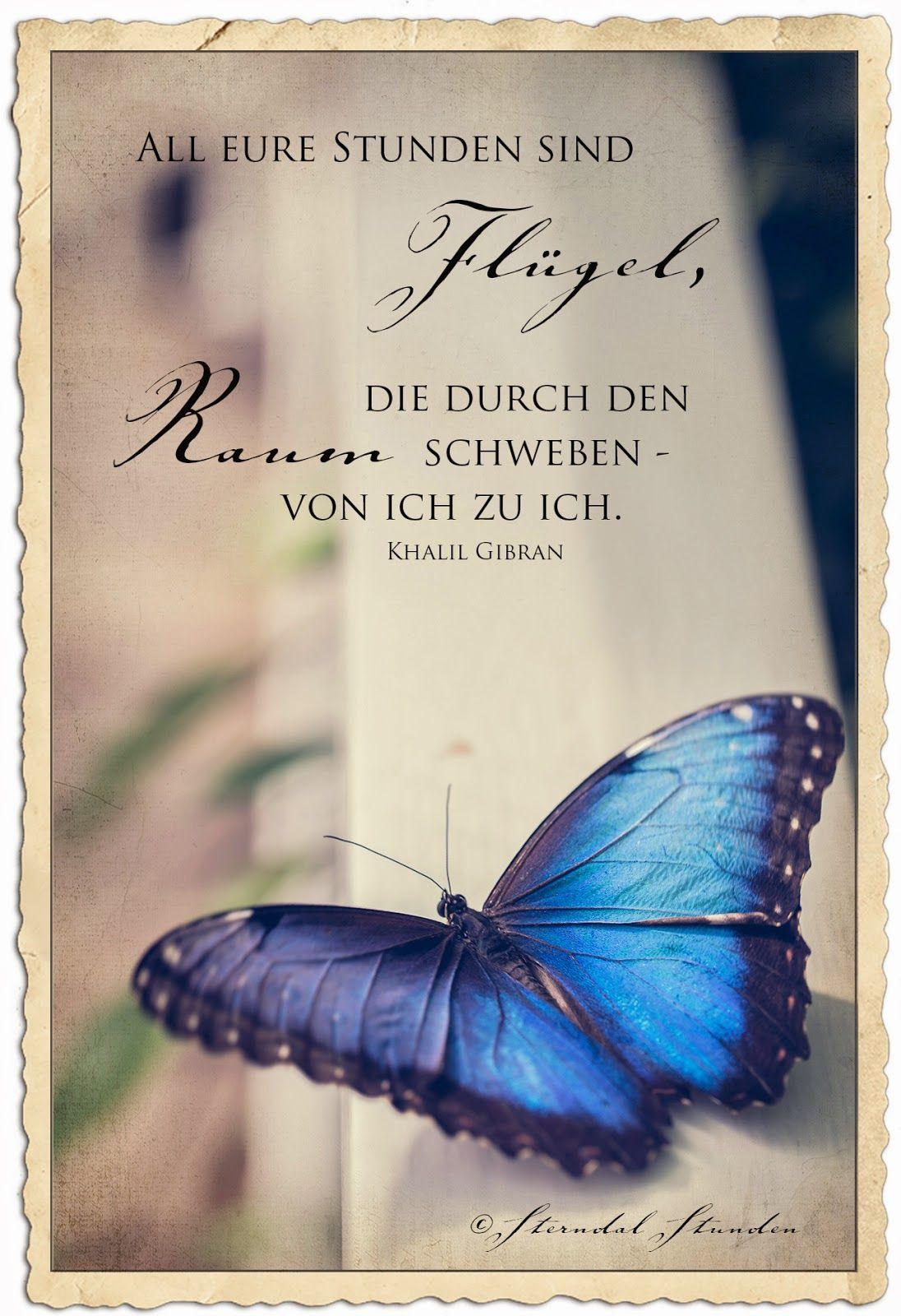 Flügel, Schmetterling . Sterndal Stunden: Zarte Schönheiten | sprüche