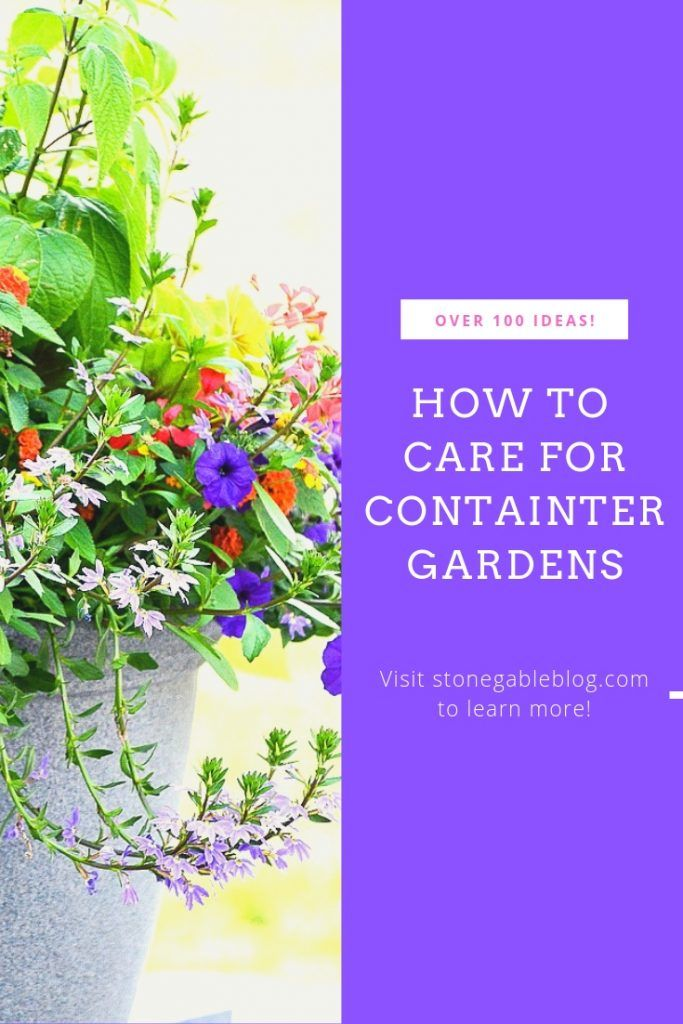 EVERYTHING YOU NEED TO KNOW ABOUT CONTAINER GARDENING is part of Container herb garden, Container gardening, Container flowers, Flower pots outdoor, Backyard garden design, Herb garden in kitchen - Everything you would ever want to know about container gardening all in one convenient place  Tons of useful info and creative ideas!