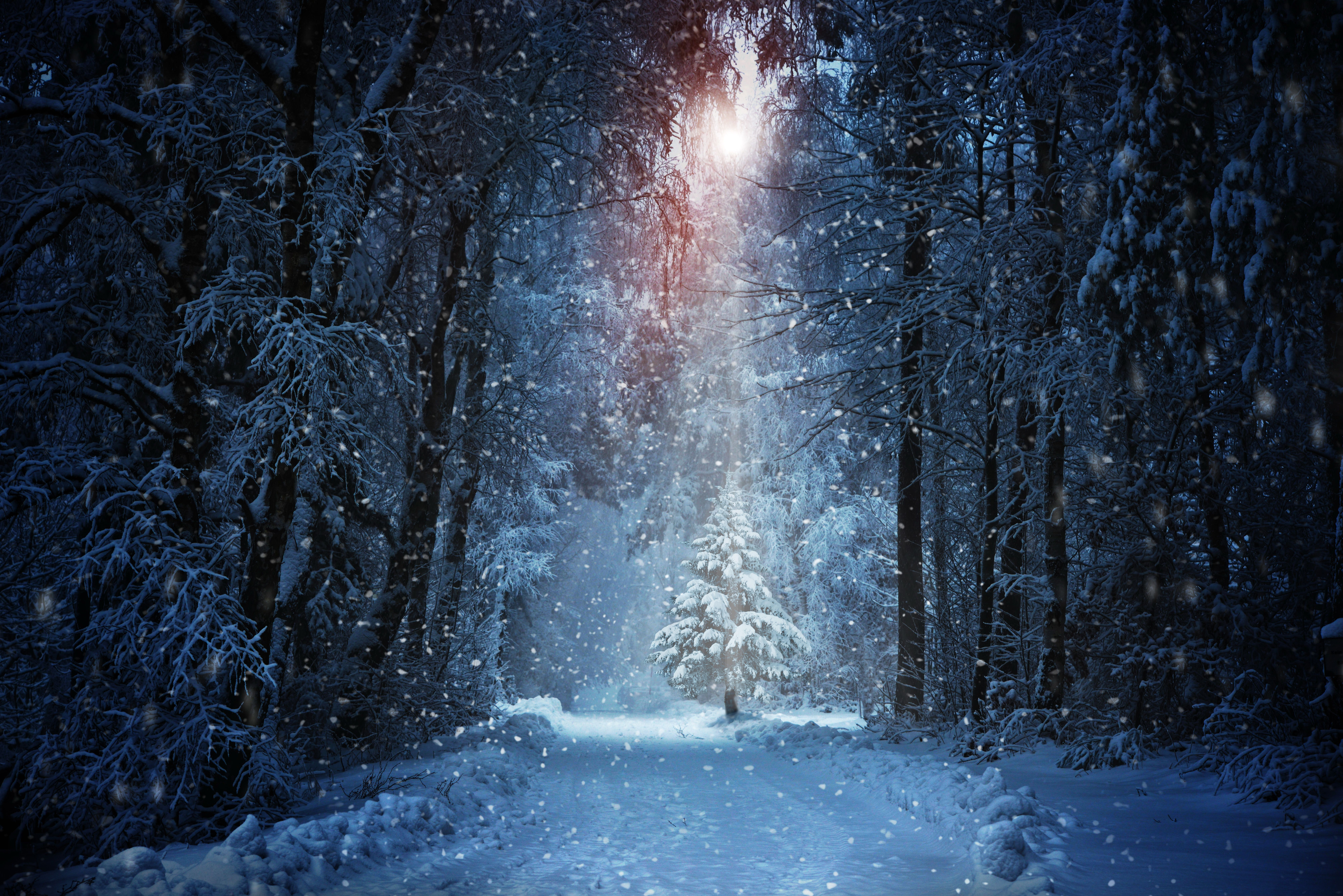 672300 Jpg 8000 5339 Winter Backdrops Christmas Photography Backdrops Winter Pictures