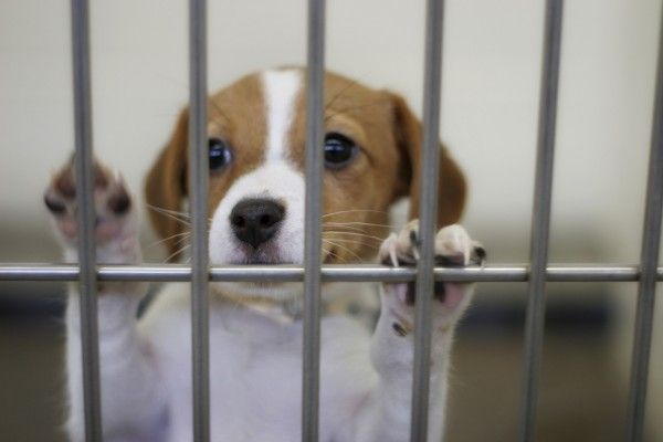 Animal Services In El Paso Texas On Fred Wilson 70 80 Per Cent Of The Animals Are Being Put Down Despite The Fact Shelter Dogs Animal Shelter Dog Adoption