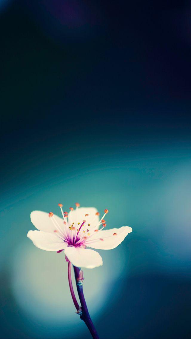 Peach blossom iPhone 5 Wallpaper Flora Pinterest