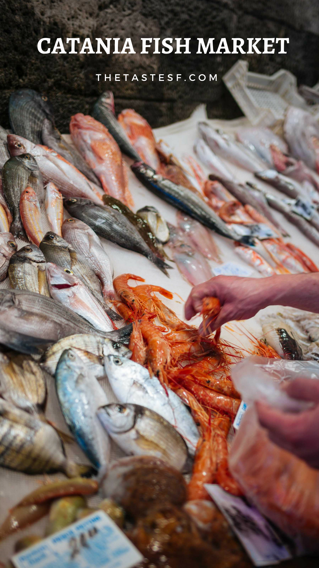 The Historic Catania Fish Market You Wont Want To Miss With