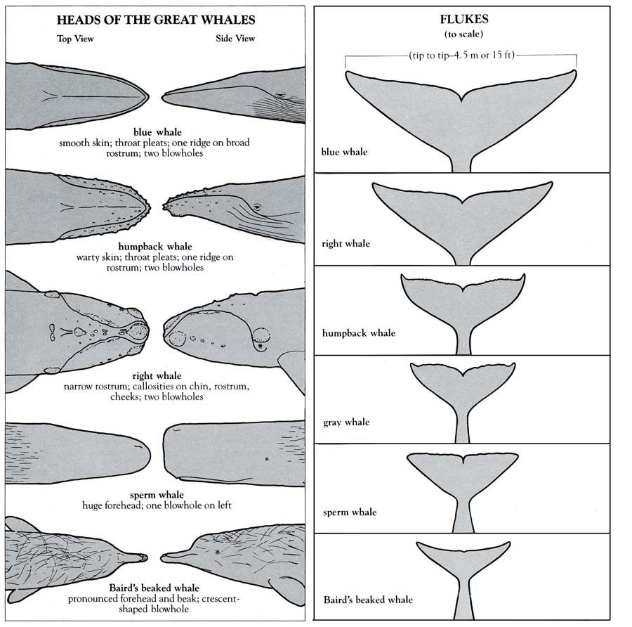 hump shaped relationship definition biology