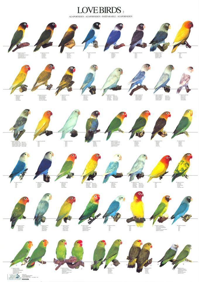 List of birds of Africa - Wikipedia