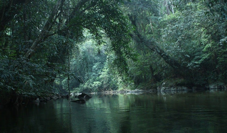 16 Foto Pemandangan Hutan Kalimantan Menariknya Lagi Di Sana Ada Cukup Banyak Wahana Wisata Yang Menarik Untuk Foto Foto Di 2020 Pemandangan Kalimantan Hutan Hujan