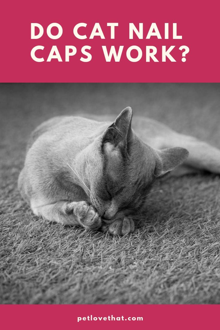 Do Cat Nail Caps Work Cat nail caps, Nail caps, Cat nails
