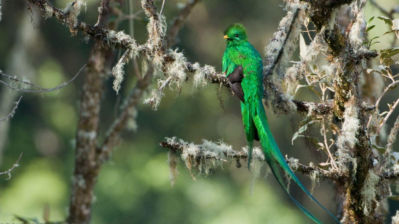 Birds of Paradise Wallpaper - beauty walpaper