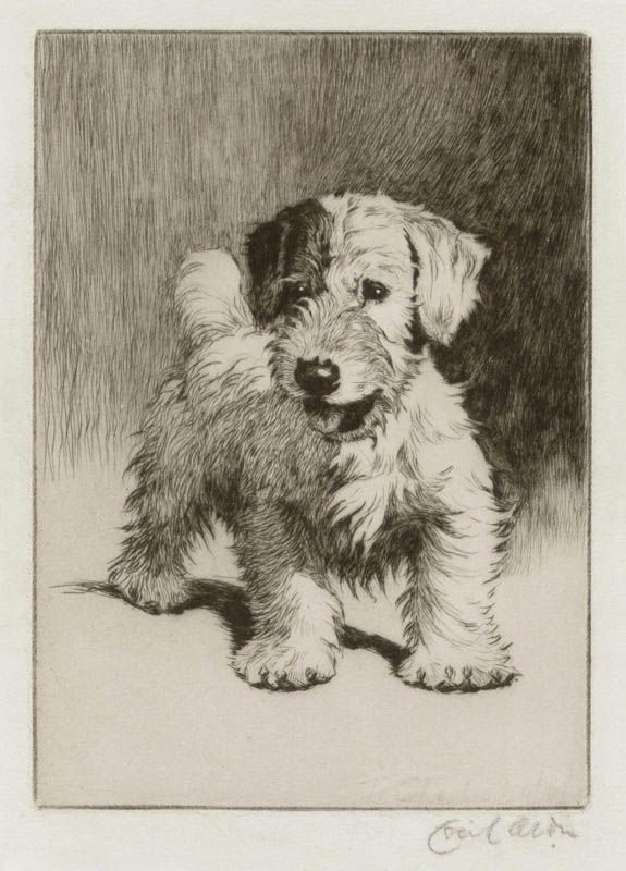 A Sealyham Terrier Bunch Etching By Cecil Aldin Circa 1910 For Sale On Sebra Prints