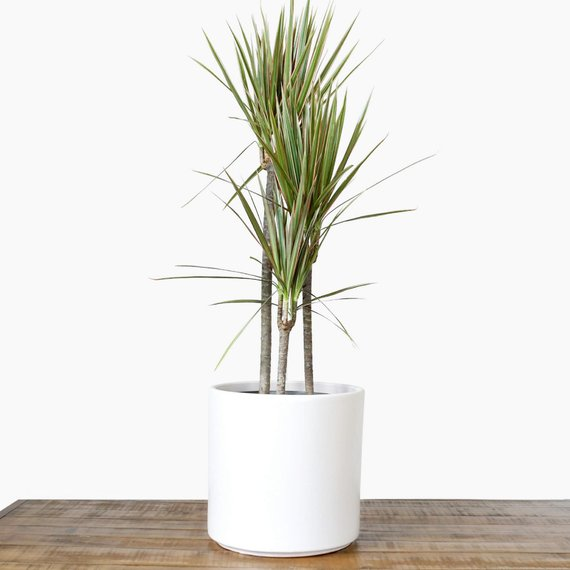 White Planter Large Indoor Plant Pot Flower Pot Modern
