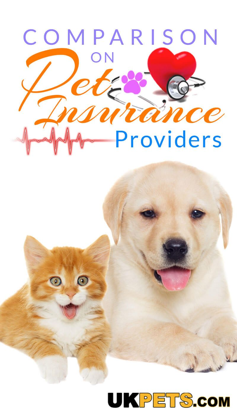 Comparison On Pet Insurance Providers Uk Pets Pet Insurance Cost Elderly Dog Care Pet Care Logo