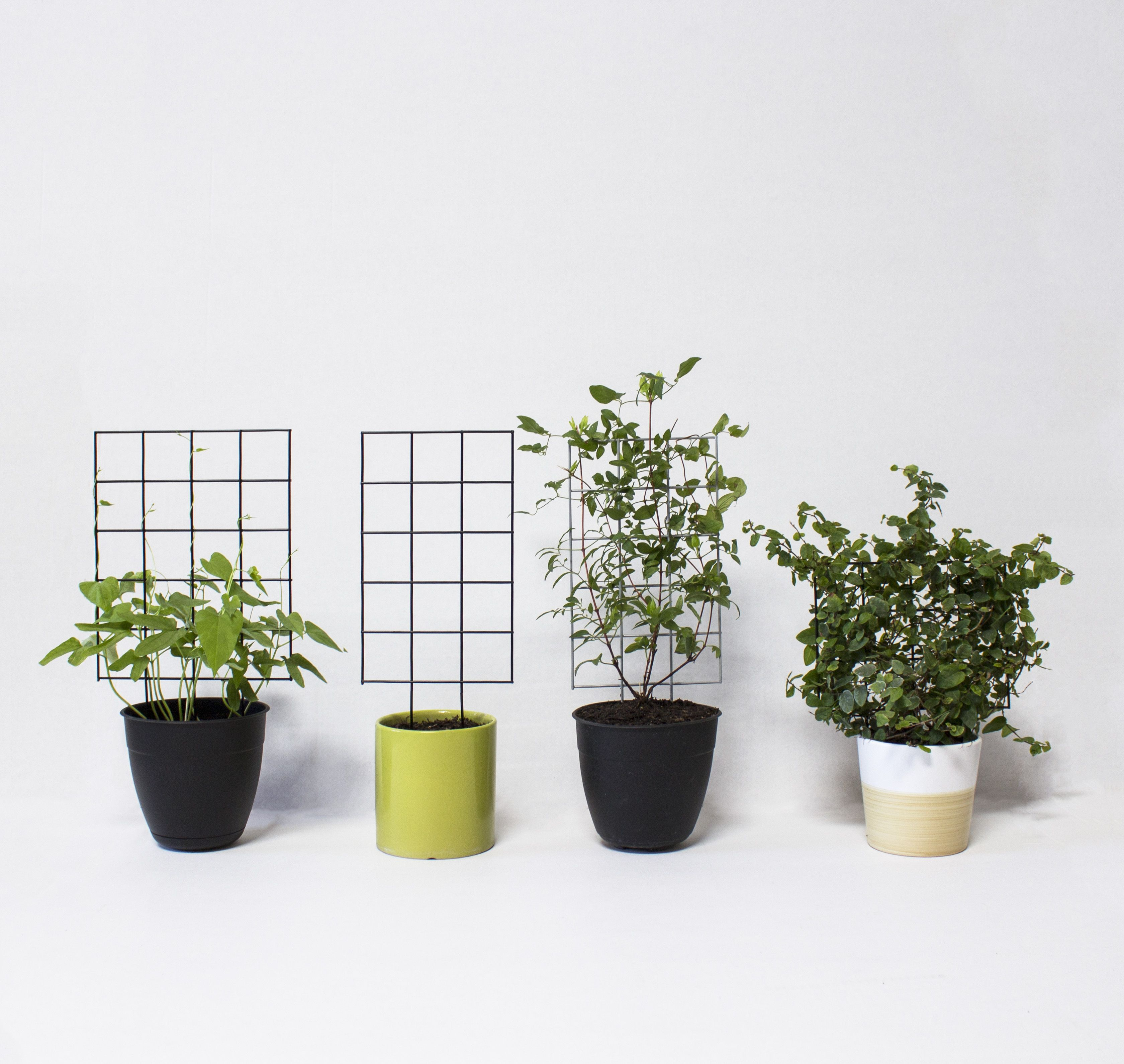The Trellisito Small Plant Trellises From Trellis Works Trellis Plants Small Plants Mini Garden