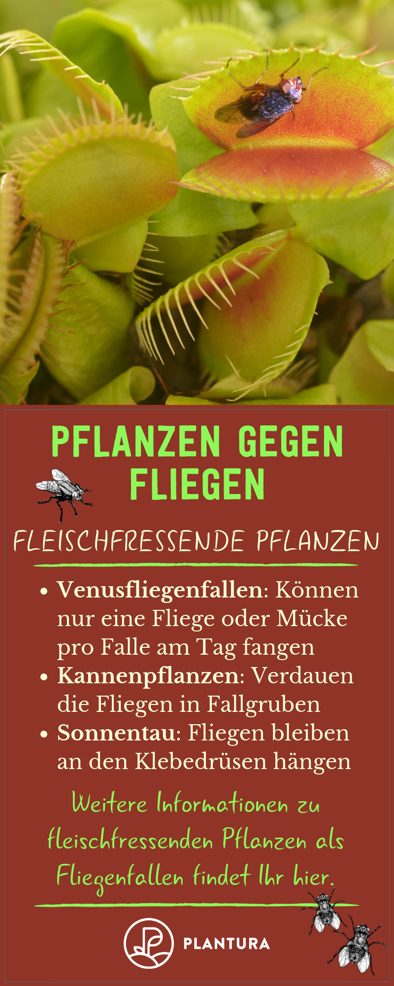 Pflanzen Gegen Fliegen Lavendel Tomaten Co Plantura Fleischfressende Pflanze Pflanzen Pflanzenschutz