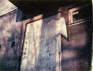 Kansanen-Stavale Laura: Forgotten Wings (Seinä)